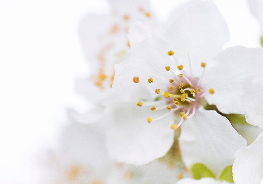 flowers_blooming